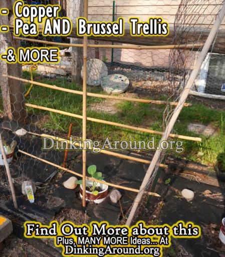 Brussel Sprout Trellis
